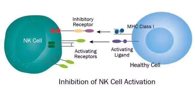NK细胞免疫疗法,或将成为晚期癌症治疗最佳选择