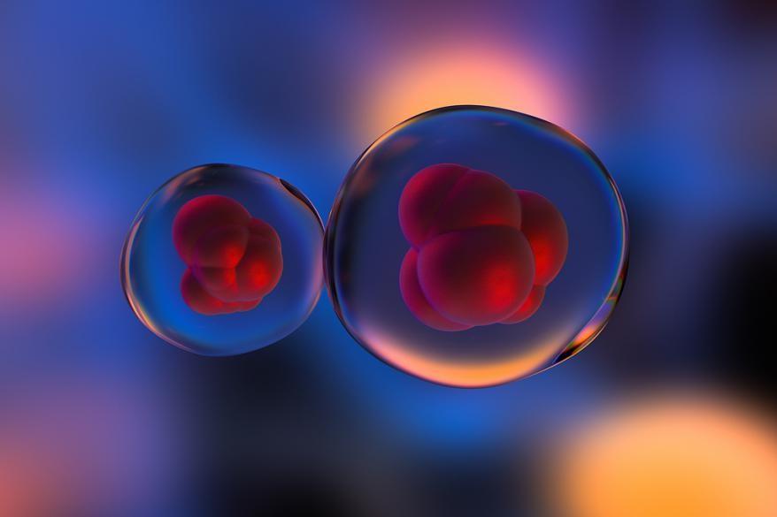 中间态全能干细胞来了 拯救濒危动物或有新办法