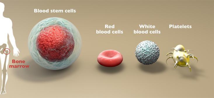 干细胞究竟能冻存多少年?