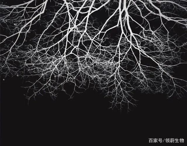 【案例分享】干细胞应用神经系统疾病效果显著!