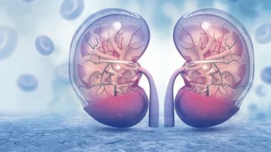 多项临床研究表明,干细胞疗法正在成为治疗慢性肾病的新希望