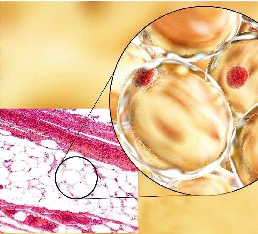 干细胞美容是不是忽悠人的?看看这些临床试验数据就知道!