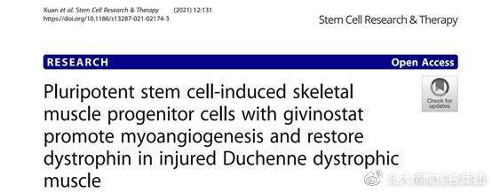 最新研究  衰老导致肌肉流失!干细胞可以修复