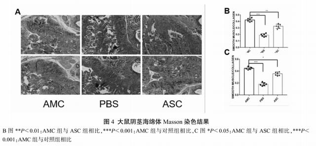 干细胞治疗神经损伤性勃起功能障碍的潜力