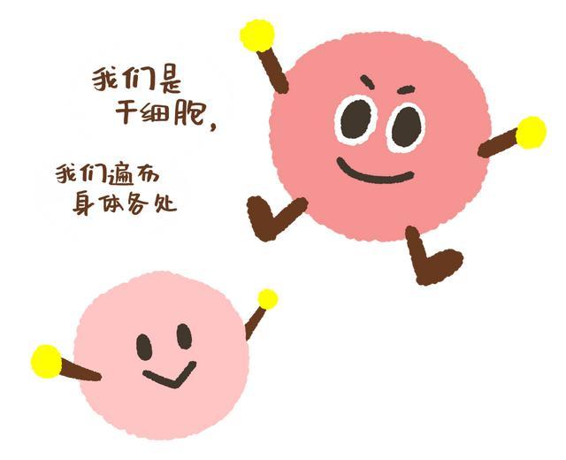 干细胞与免疫细胞,他们有啥不一样?