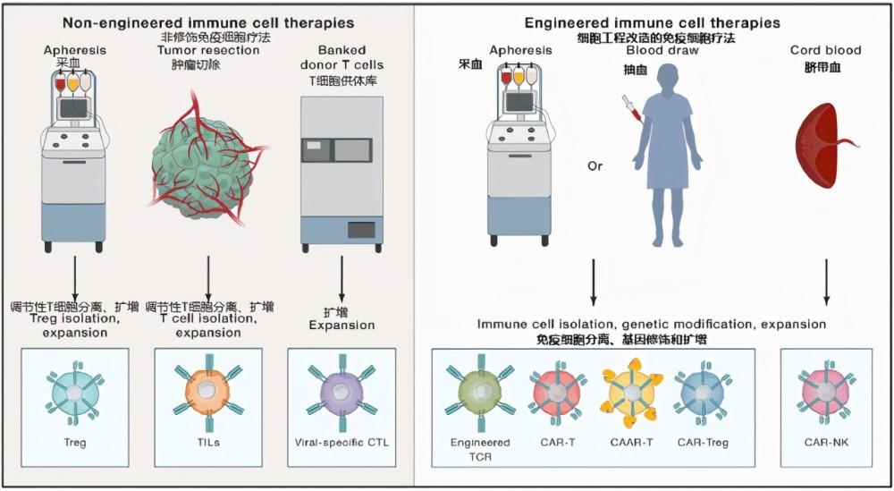 """NK免疫细胞疗法:为何沦为癌症患者的""""超级杀手""""?"""