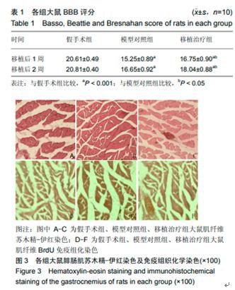 国家发文!干细胞与器官修复再成热点