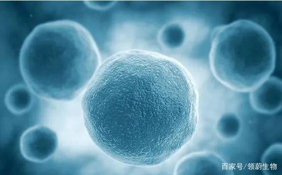 追赶世界干细胞科技成果转化:全产业链科技园模式正在我国探索