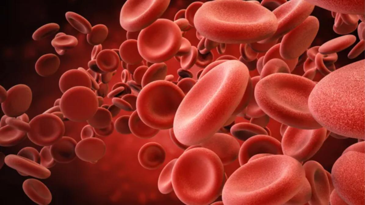 Nature子刊:人体干细胞移植疗效提升有望!抗衰物质NR凸显神通