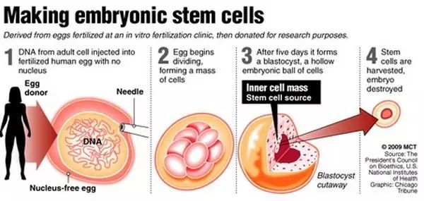 """你输的""""干细胞"""",是真的吗?"""