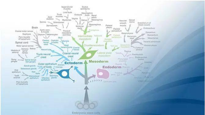 关于干细胞产业及临床转化的进展与展望