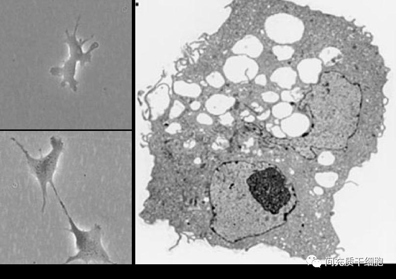 您是否还在迷信国外的干细胞质量?
