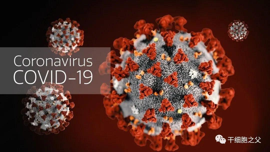 研究显示:COVID-19重症患者接受干细胞治疗,存活率至少提高2.5倍