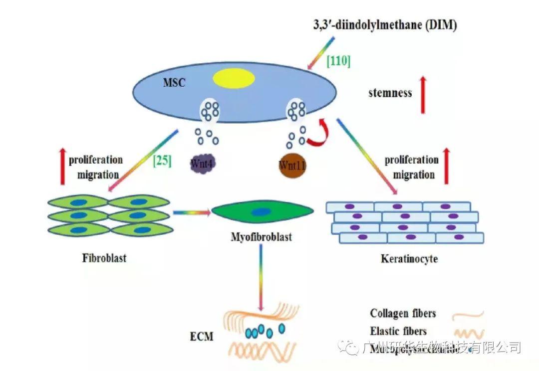 外泌体是什么