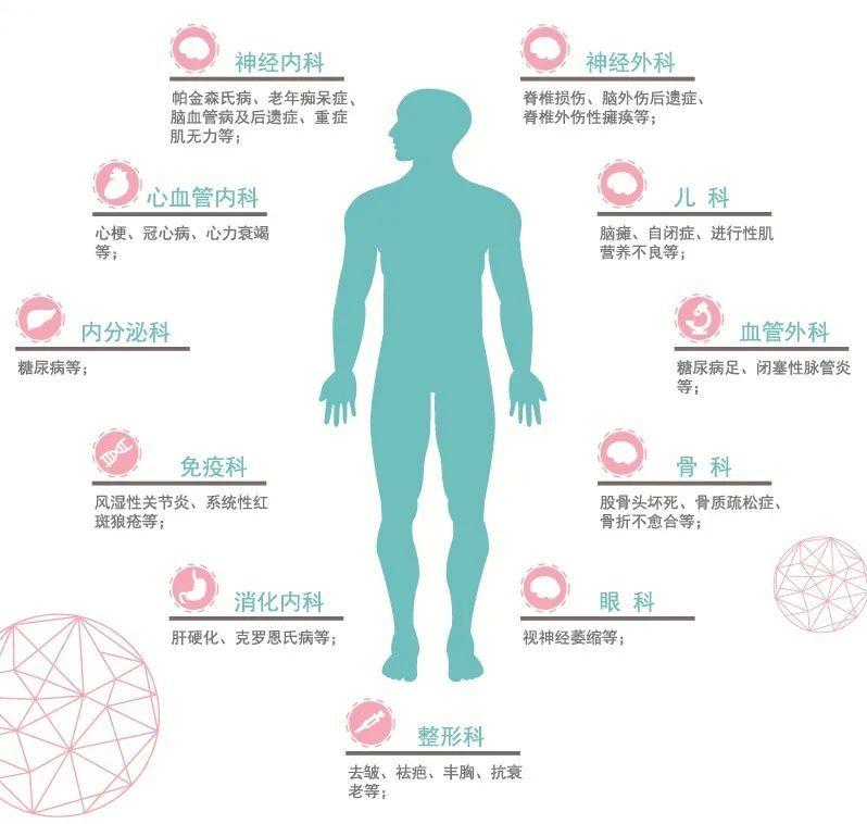 干细胞与药物治疗有什么不同?