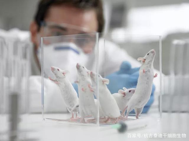 临床案例:干细胞治疗肝病的基础和临床研究,显示其效果显著
