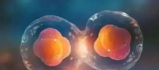 卵巢抗衰丨干细胞帮助卵巢恢复健康,回到十年前!