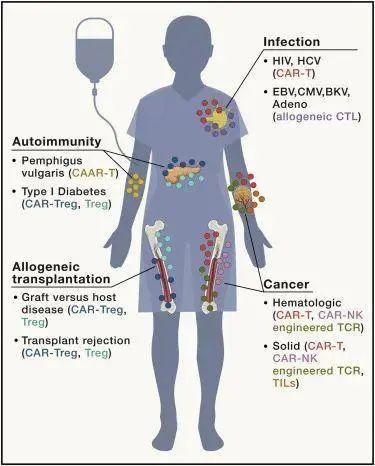 Cell:免疫细胞疗法的未来发展蓝图