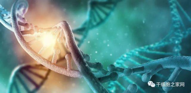 史上最全!干细胞的100多种当前和潜在用途