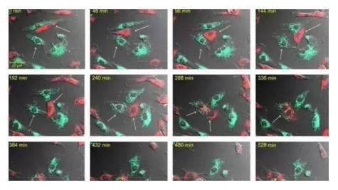 间充质干细胞的14种特质