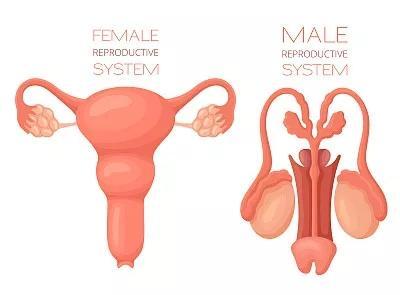 干细胞及其外泌体治疗早发性卵巢功能不全的研究进展