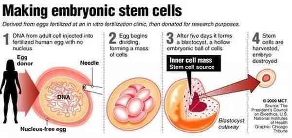 """你所接触的""""干细胞治疗""""确定是真的吗?赶紧看过来,别再被忽悠了!"""
