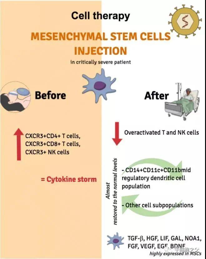 连续获得临床批件!国内间充质干细胞转化应用将走向大众