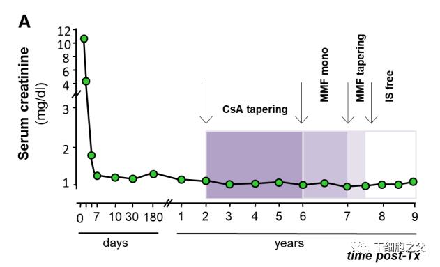 世界首例 | 输注干细胞助力肾移植获成功,免疫耐受长达18个月