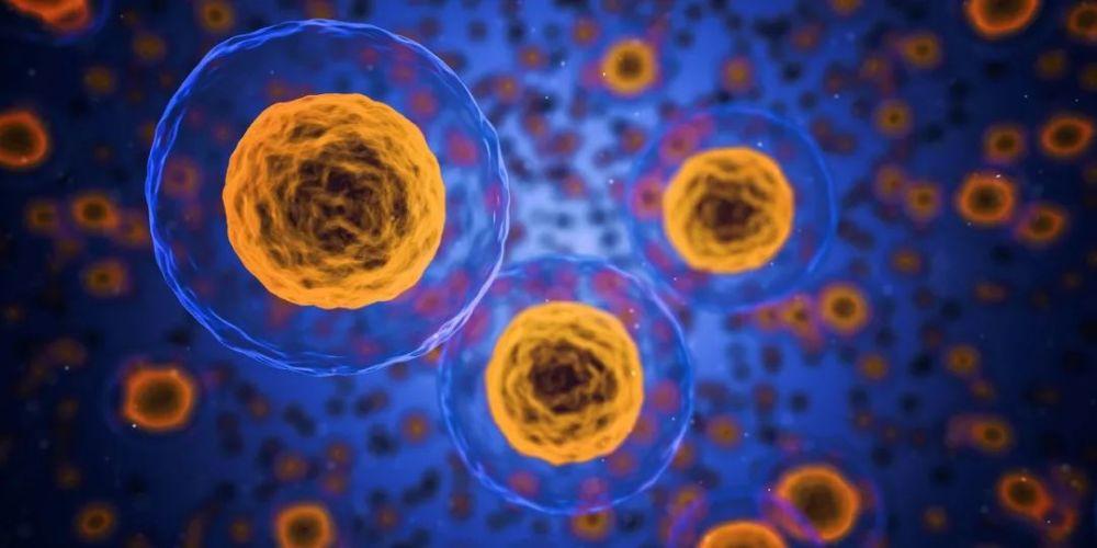 都说干细胞可以再生,人体内的干细胞是无穷无尽的吗?