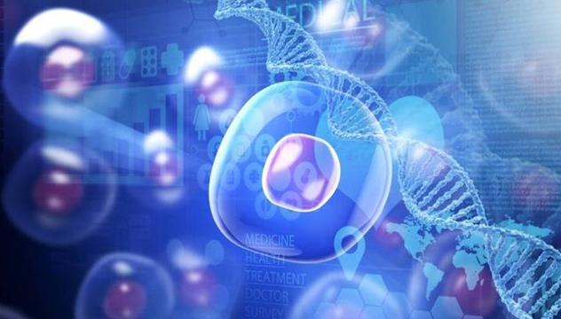 干细胞与免疫细胞有什么区别,到底该储存哪一种?