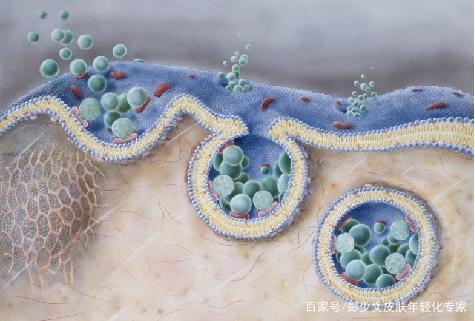 外泌体如何从细胞层面实现抗衰?